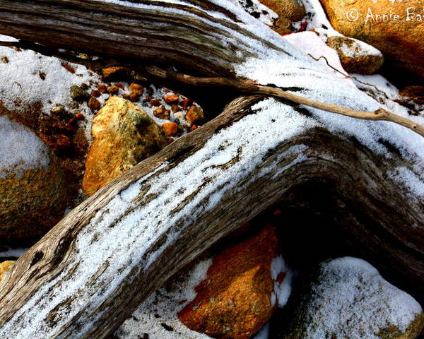 Driftwood Poster featuring the photograph Driftwood by Annie Babineau