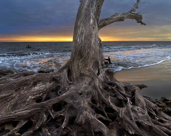 Clouds Poster featuring the photograph Driftwood On Jekyll Island by Debra and Dave Vanderlaan