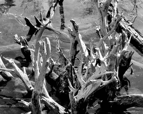 Reflection Poster featuring the photograph Driftwood On Lost Lake by Michelle Calkins
