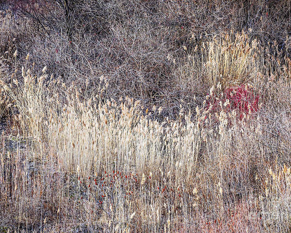 Grasses Poster featuring the photograph Dry Grasses And Bare Trees In Winter Forest by Elena Elisseeva