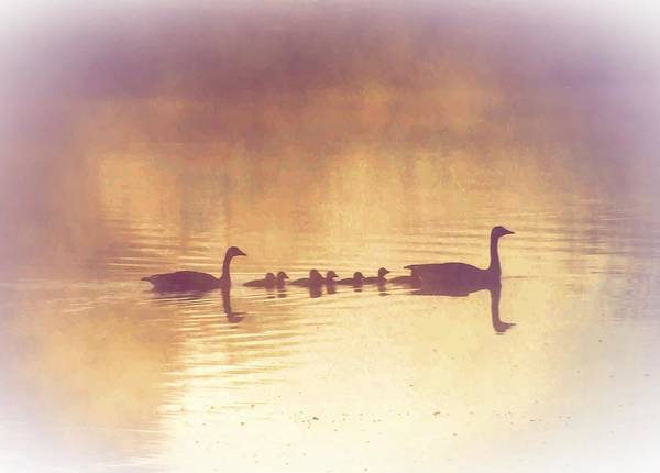 Duck Poster featuring the photograph Duck Family by Bill Cannon