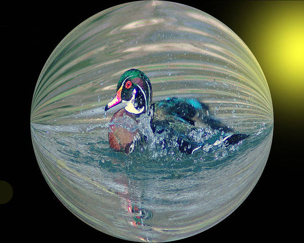 Ducks Poster featuring the photograph Duck In A Bubble by Jeff Swan
