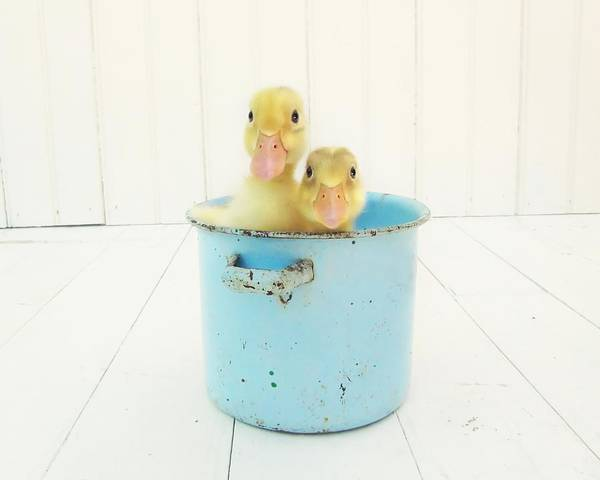 Ducklings Poster featuring the photograph Duck Soup by Amy Tyler