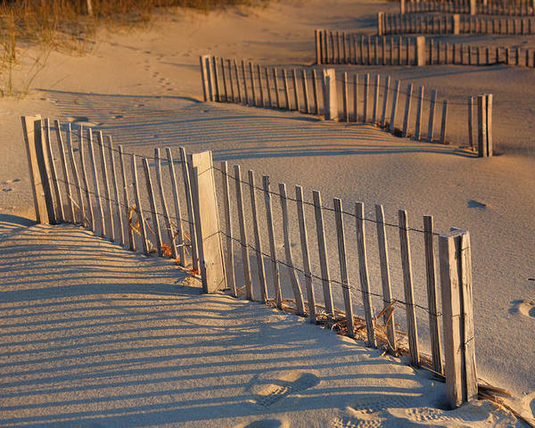 Fence Poster featuring the photograph Dune Fences Early Morning by Steven Ainsworth