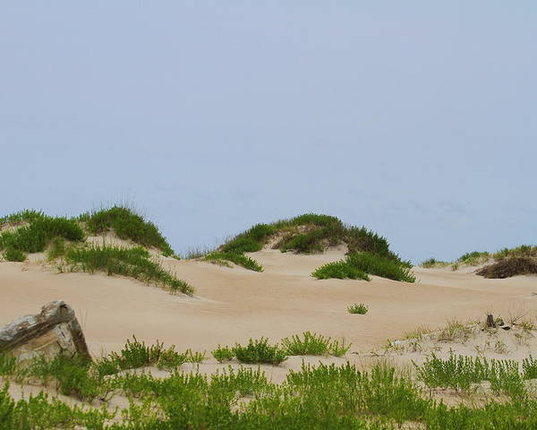 Dune Poster featuring the photograph Dunes And Grasses 7 by Cathy Lindsey