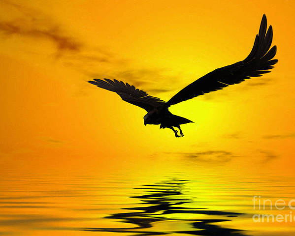 Eagle Sunset Canvas Poster featuring the digital art Eagle Sunset by John Edwards