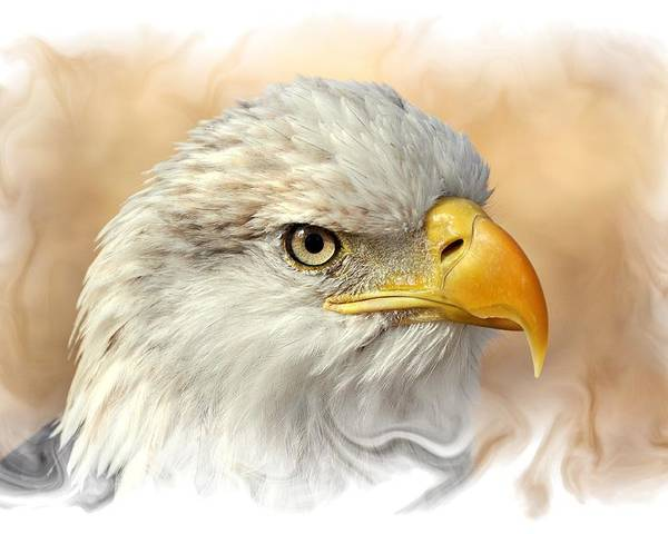 Eagle. American Bald Eagle Poster featuring the photograph Eagle6 by Marty Koch