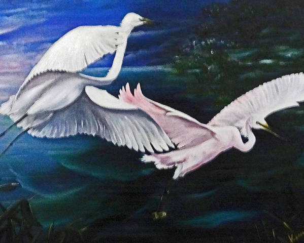 Snowy Egrets Poster featuring the painting Early Flight by Karin Dawn Kelshall- Best