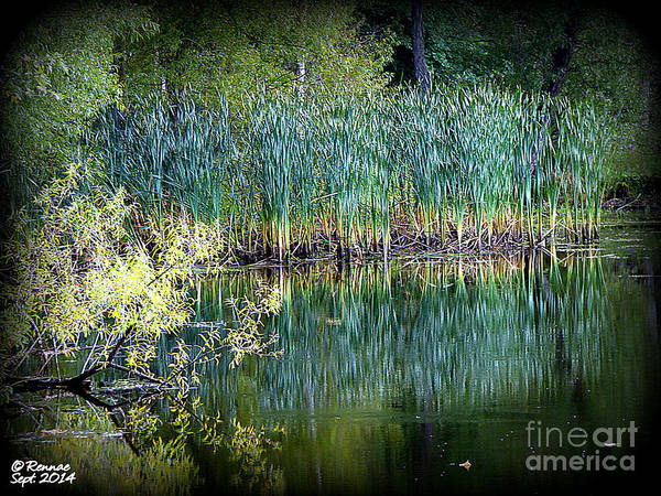 Landscape Poster featuring the photograph Edge Of Reflections by Rennae Christman
