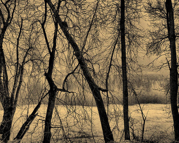 Tree Poster featuring the photograph Edge Of Winter by Bob Orsillo