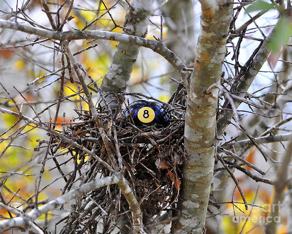 Bird Nest Poster featuring the photograph Eggstraordinary by Al Powell Photography USA