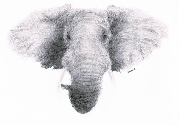 Elephant Poster featuring the drawing Elephant by Lucy D