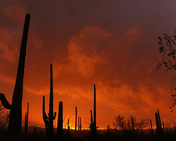 Desert Poster featuring the photograph Embers Of The Day by Justin Curry