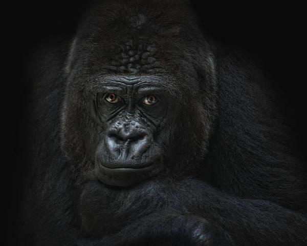 Animal Poster featuring the photograph Emotive Robbery by Joachim G Pinkawa