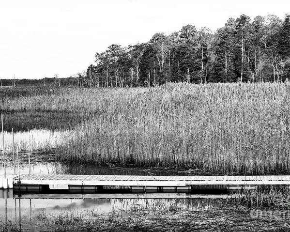 Empty Pine Barrens Poster featuring the photograph Empty Pine Barrens by John Rizzuto