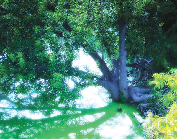 weeping Willow Poster featuring the photograph Enchanted Forest 15 by The Art of Marsha Charlebois