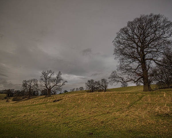 Trees Poster featuring the photograph English Pasture by Jason Lanier