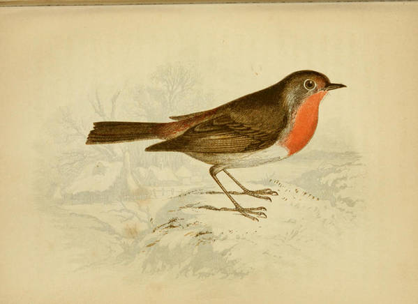 English Poster featuring the painting English Robin by Philip Ralley