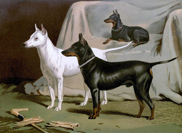 English Poster featuring the painting English Terriers by Charlie Ross