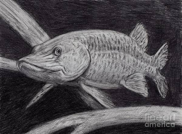 Musky Fish Poster featuring the drawing Esox Masquinongy by Larry Green