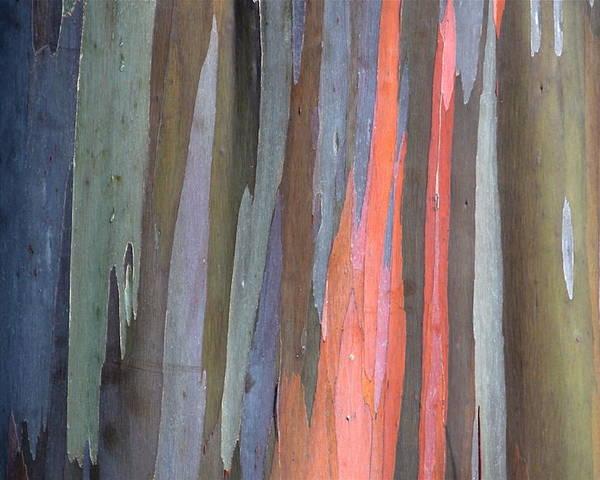 Eucalyptus Poster featuring the photograph Eucalyptus Tree Bark by Karon Melillo DeVega