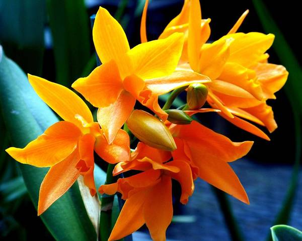 Flowers Poster featuring the photograph Exotic Orange by Karen Wiles