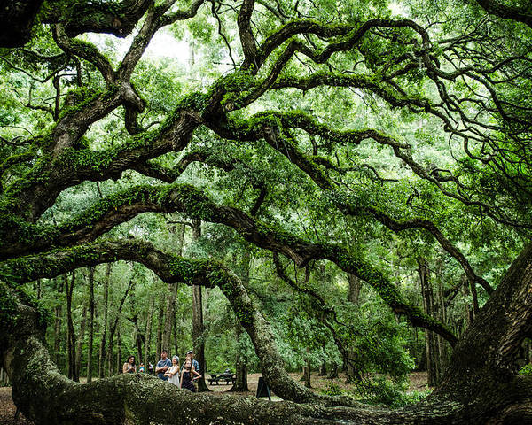 Tree Poster featuring the photograph Fairy Tale Branches by Jeff Ortakales