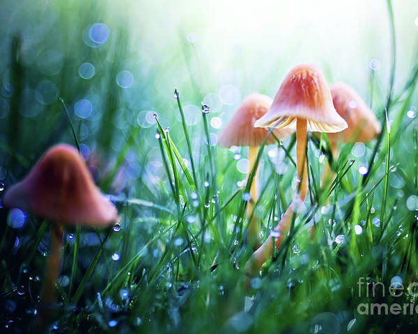 Mushroom Poster featuring the photograph Fairytopia by Sylvia Cook