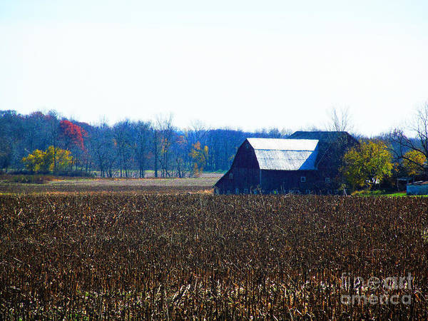 Barns Poster featuring the photograph Fall And White Barn by Tina M Wenger