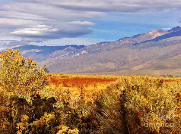 Sky Poster featuring the photograph Fall Desert Colors by Marilyn Diaz
