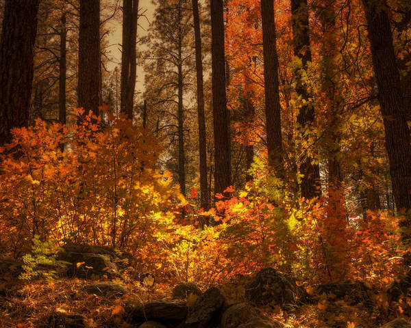 Fall Poster featuring the photograph Fall Forest by Saija Lehtonen