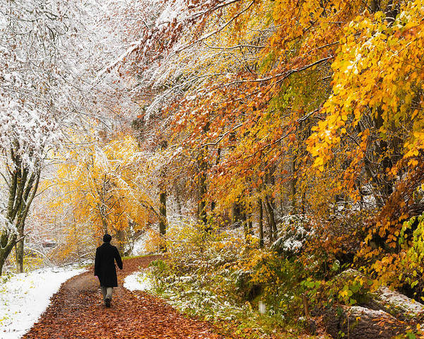 Fall Poster featuring the photograph Fall Or Winter - Autumn Colors And Snow In The Forest by Matthias Hauser
