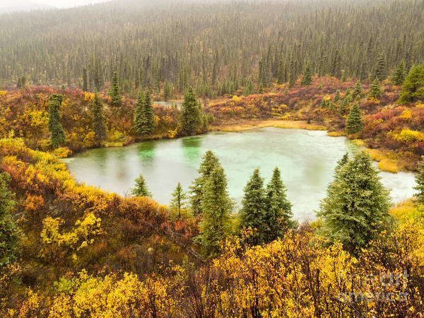 Autumn Poster featuring the photograph Fall Rain On Wilderness Lake Yukon T Canada by Stephan Pietzko