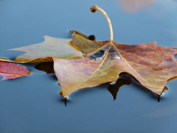 Leaves Poster featuring the photograph Fall Reflections by Jane Ford