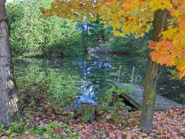 Fall Poster featuring the photograph Fall Scene By Pond by Brenda Brown