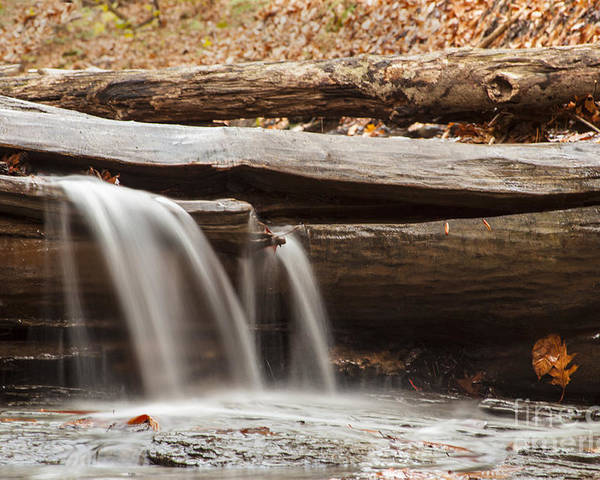 Waterfall Poster featuring the photograph Falls Through A Tree by Darleen Stry
