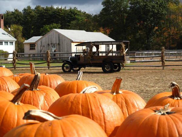 Pumpkin Poster featuring the photograph Farm Stand Pumpkins by Barbara McDevitt