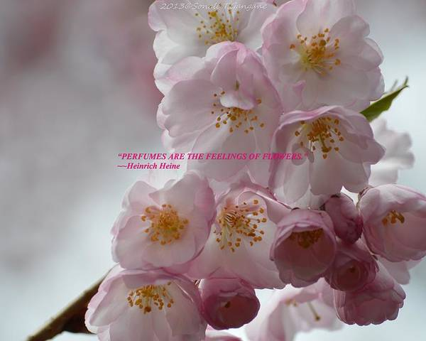 Pink Blossoms Poster featuring the photograph Feelings Of Flowers by Sonali Gangane