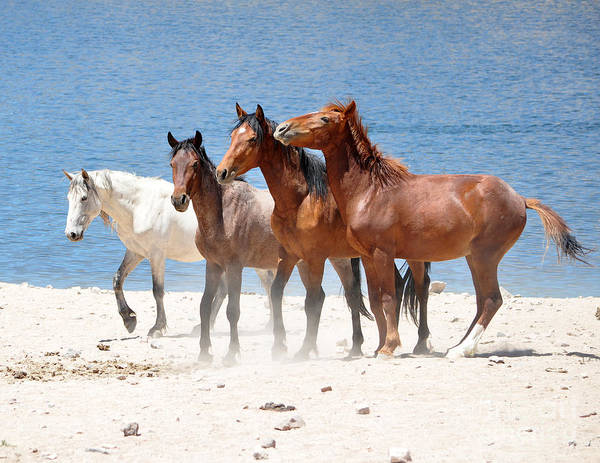 Free Horses Poster featuring the photograph Fellowship by Lula Adams