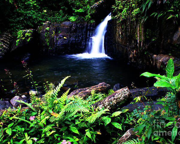 Puerto Rico Poster featuring the photograph Ferns Flowers And Waterfall by Thomas R Fletcher