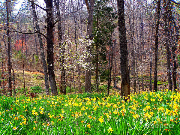 Yellow Daffodils Poster featuring the photograph Field Of Daffodils by Kathy White
