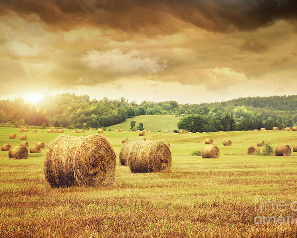 Agricultural Poster featuring the photograph Field Of Freshly Bales Of Hay With Beautiful Sunset by Sandra Cunningham