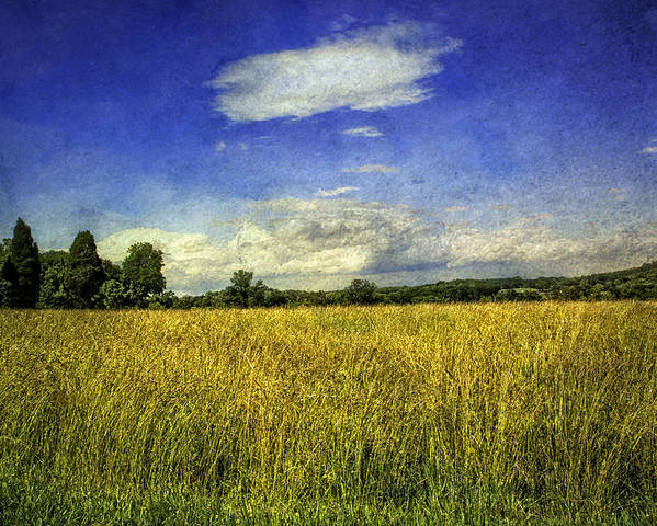 Field Poster featuring the photograph Field Of Gold by Madeline Ellis