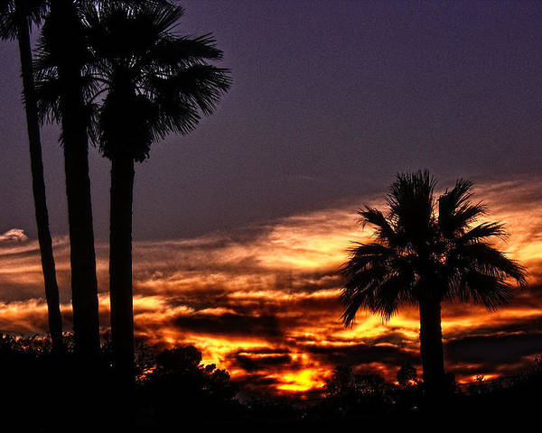 Palm Trees Poster featuring the photograph Fire Haven by Marquis Crumpton