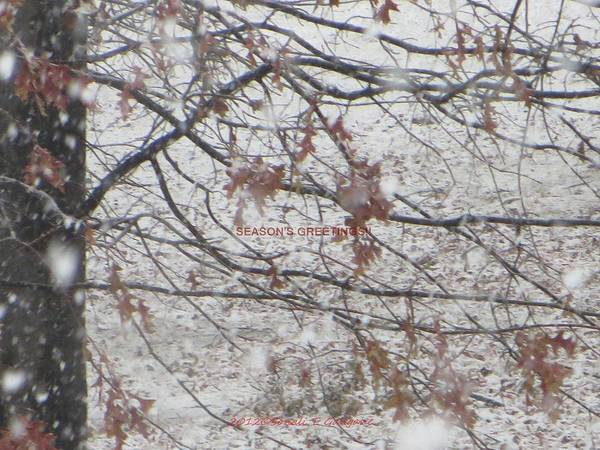 Winter Season Poster featuring the photograph First Snowfall by Sonali Gangane