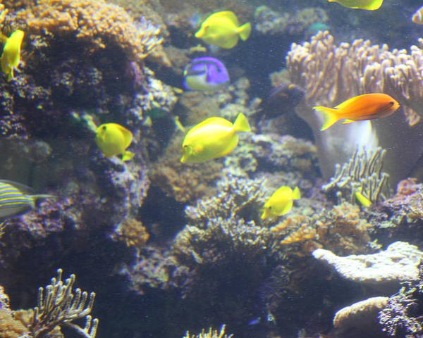 Inner Poster featuring the photograph Fish - National Aquarium In Baltimore Md - 121246 by DC Photographer