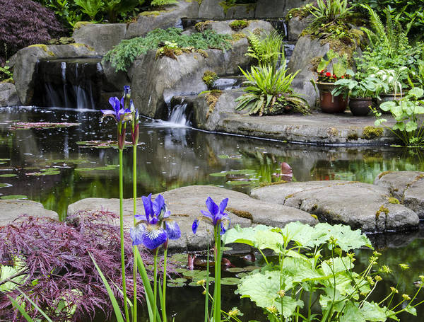 Flower Poster featuring the photograph Flags And A Pond by Irene Theriau