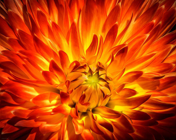Dahlia Poster featuring the photograph Flaming Dahlia - Paintography by Dawn M Smith