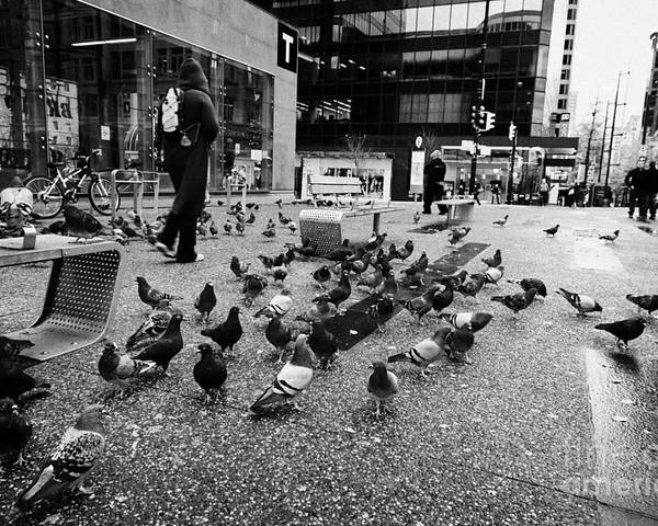 Flock Poster featuring the photograph flocks of pigeons on the street outside Vancouver city centre station on granville street BC Canada by Joe Fox