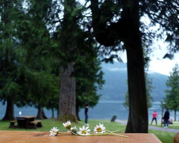 Daisies Poster featuring the photograph Floral's At The Lake by Nicki Bennett